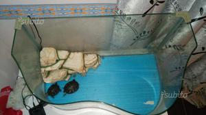 Isolotto per tartarughe galleggiante e posot class for Tartarughiera grande vetro