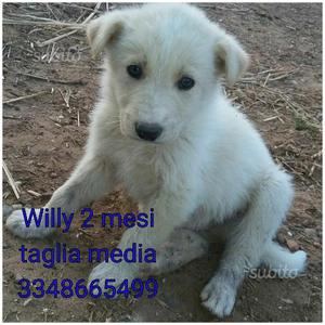 Willy 2 mesi