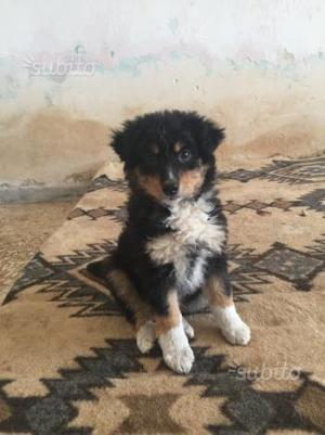 Zazzy dolcissima cucciola tg media 2 mesi_adozione