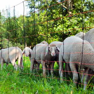 Kerbl Recinzione in rete per pecore TitanNet 90 cm