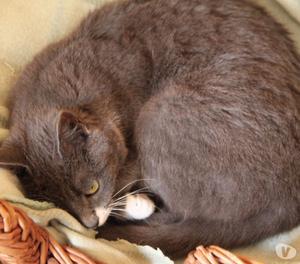 Perlina, gattina cucciola 8 mesi