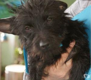 Spyke è un'adorabile cagnolino di taglia piccola