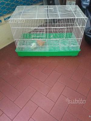 Gabbia per uccelli e trasportino per cani-gatti