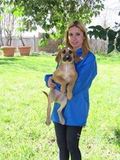 Visibile zed cucciolo 3/4 mesi tg media