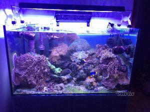 Plafoniera acquario marino led bizeta shop 100w posot class for Acquario marino 100 litri prezzo