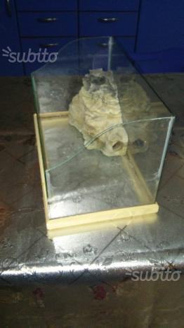Acquario teca per pesci tartarughe ecc posot class for Acquario tartarughe prezzo