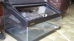 Tartarughe isola del gran sasso ditalia posot class for Acquario tartarughe prezzo