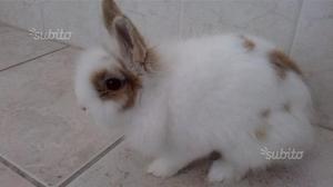 Gabbia per criceti roditori coniglio nano posot class - Lettiera coniglio nano ...