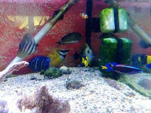 Pesci marini e coralli