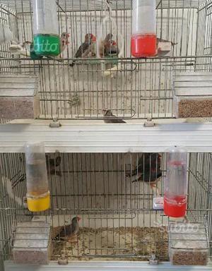 Uccelli con gabbie e pesci con acquari