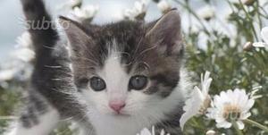 Ultimi gattini disponibili