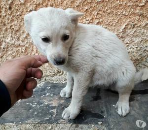 Fagiolina,dolcissima cucciola di 2 mesi circa