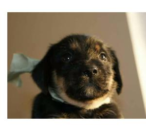Achille 2 mesi in adozione