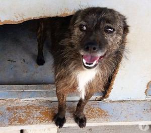 Frida, cane 2 anni e mezzo, taglia piccola
