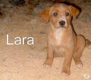Lara, splendida cucciola di quasi 2 mesi da adottare