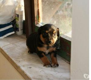 Raul 2 mesi in adozione