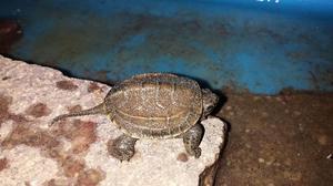Laghetto per tartarughe posot class for Stagno per tartarughe