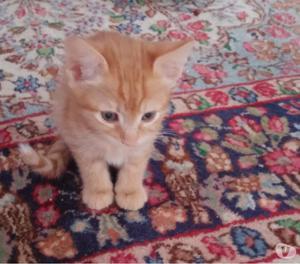 Regalo gattini 2 mesi