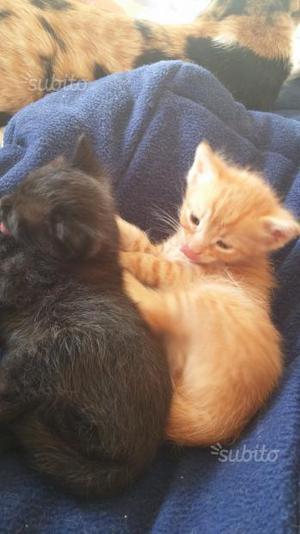 2 gattini in adozione 3 mesi