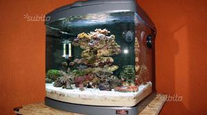 Acquario sera space angolare con vetro sferico posot class for Acquario angolare