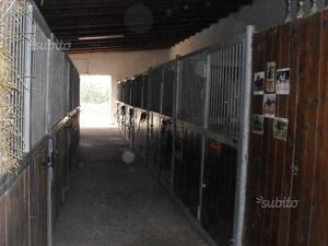 Portaballoni mangiatoia per cavalli posot class for Box cavalli usati vendo