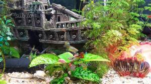 Pesci acqua dolce posot class for Pompette per acquari