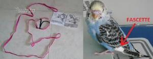 Pettorine per tutti i pappagalli