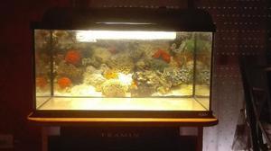 Acquario ottimo posot class for Acquario grande usato
