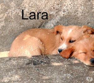 Lara, splendida cucciola di 2 mesi da adottare