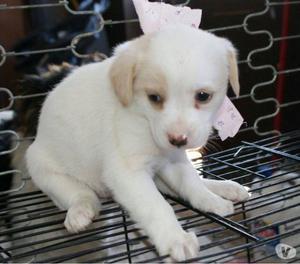 Tartufina femmina 2 mesi e mezzo