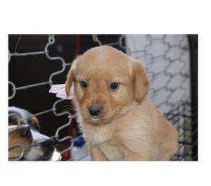 Venus meravigliosa cucciola in adozione