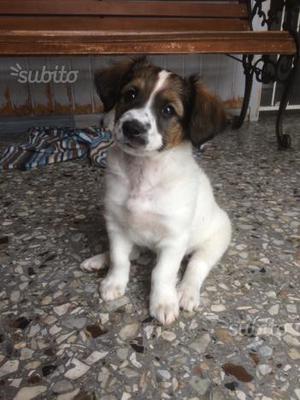 Cucciola 2 mesi taglia piccola in adozione