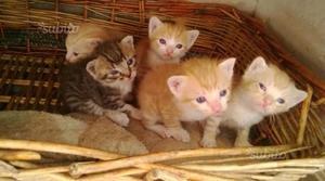 Gattini stupendi Regalo