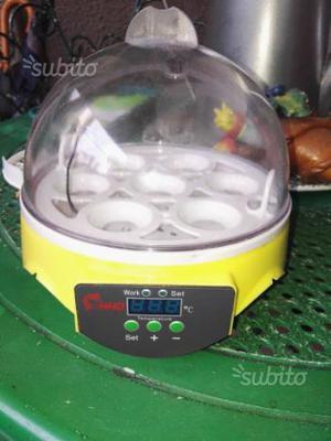 Incubatrice 7 uova