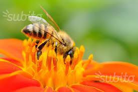 Nuclei api