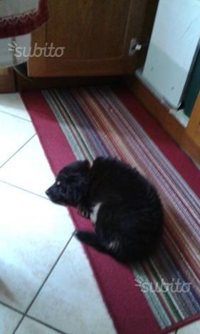 Regalo cucciolo bastardino femmina di circa 2 mesi