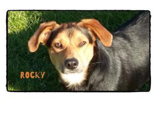 Rocky, il segugio bassotto, concentrato di simpatica energia