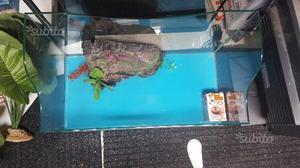 Vasca in vetro tartarughiera posot class for Pompa tartarughiera