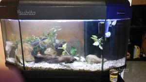 Acquario poseidon 80 litri posot class for Acquario 300 litri prezzo