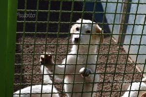 Cuccioli coccolosi in gabbia