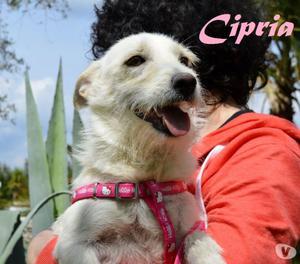 dolce e intelligente Cipria, 2 anni taglia piccola