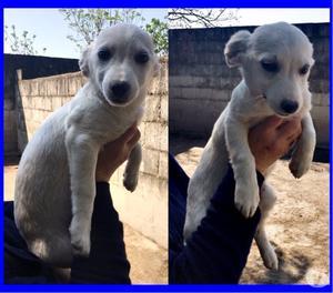 BOTTONCINA cucciola 4 mesi mollata in canile, cerca una mamm