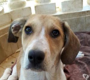 Diana, dolcissima cucciolona di 3 mesi