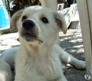 Galak, stupendo cucciolo di 3 mesi