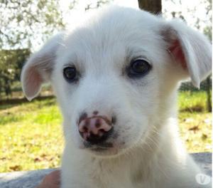 Jimmy, irresistibile cucciolotto di 3 mesi