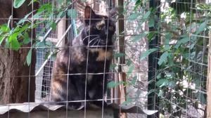 Benedetta, una gattina di quasi 1 anno