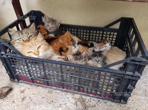 Gattini gattino REGALASI