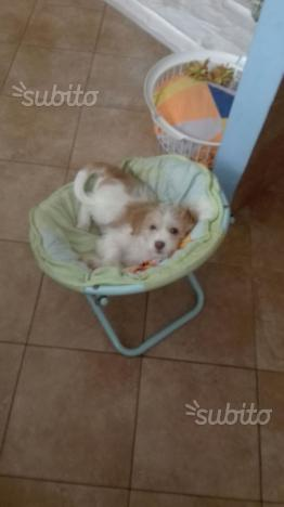 Molly 6 mesi taglia piccola