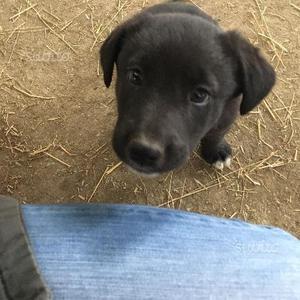 Regalo cucciolo meticcio di due mesi