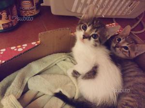 Regalo gattini gia sverminati